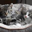 «Как вечный двигатель». Котята устроили круговорот в клетке и рассмешили соцсети (ВИДЕО)