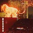 Огненный лев и яркий фейерверк: зажигательное шоу устроили на футбольном матче в Аргентине
