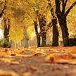Днем будет солнечно, а ночью – заморозки: прогноз погоды на 29 сентября