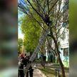 В Гомеле спасатели сняли с дерева 12-летнюю девочку