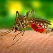 Комар заразил девочку редчайшим заболеванием
