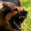 В Украине одичавшие собаки душат кур и раздирают коз