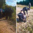 Продолжается расследование ДТП в Белоозёрске с пятью смертями: водителя заключили под стражу