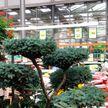 В минском магазине дерево в контейнере продают почти за 7 тысяч рублей!  Узнали, почему так дорого
