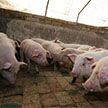 Свинья убила фермера на рынке в Китае