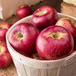 Яблоко может быть вредным. Врач призвала не есть фрукты вечером