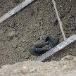 Двое рабочих погибли в Молодечно: их засыпало землёй