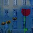 «Праздник света» начался в Лионе: фасады зданий, площади, мосты – в качестве мольберта для художников