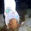 В Австралии осьминог примерил кепку и попал на видео