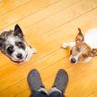 Собака «спасла» своего друга от пылесоса. Только посмотрите, как она тащит пса за хвост!