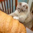 7+ смешных и милых фото, где коты похожи на буханки хлеба. Посмотрите, вы улыбнетесь 100%!