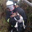 Спасатели достали охотничью собаку из заброшенного колодца с водой в Рогачевском районе