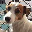 Пёс выжил после падения из окна семиэтажки в Бразилии