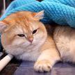 Международная выставка кошек проходит в Минске