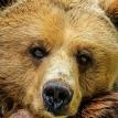 Пьяный поляк в зоопарке залез в вольер к медведю и попал на видео