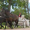 Путешествие в XIX век на экипаже и верхом: в музее-усадьбе Огинского восстановят княжескую конюшню