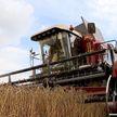 Уборочная-2020: урожайность зерновых выше, чем в прошлом году