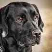 Пропавшая собака вернулась к хозяину через девять лет