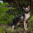«Кошка-оборотень» впечатлила пользователей Сети (ФОТО)