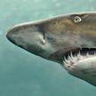 Серферу удалось прогнать акулу, нецензурно на нее наругавшись