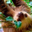 Селфи с дикими животными могут запретить туристам в Коста-Рике