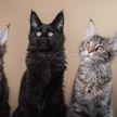 Коты устроили вечеринку. Вы точно захотели бы туда попасть! Только посмотрите на это! (ВИДЕО)