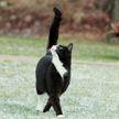 Когда ты слишком красивый: кот засмотрелся на себя в зеркале и рассмешил пользователей Сети
