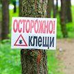 Санэпидемслужба показала на карте, где обитает больше всего клещей в Минске