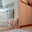 «Хозяин, вернись!»: кот остался один дома на 30 минут. Смотрите, что произошло (ВИДЕО)