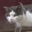 Бешеные кошки нападают на людей в Барановичах