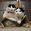 Учёные выяснили, почему коты любят коробки