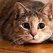 Житель Сенненского района убил кошку тростью: возбуждено уголовное дело