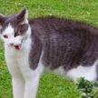 Коту показали ковер с собратьями – и он очень удивился. Только посмотрите на эту реакцию! (ВИДЕО)