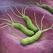 Как предсказать рак желудка до появления симптомов? Ученые нашли новый биомаркер