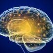 Ученые узнали о способности мозга предсказывать то, что произойдет дальше