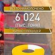 Белорусские аграрии намолотили более 6 млн т зерна
