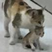 Мама-кошка притащила больного котенка в больницу и восхитила соцсети
