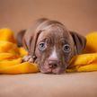 Собака спасла хозяина от смерти во сне