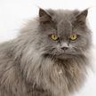 Кот взорвал интернет своим эмоциональным монологом. Только послушайте, как смешно он возмущается!