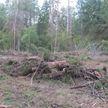 Один мужчина погиб, второй пострадал. На заготовке леса в Могилевской области произошло два ЧП за день