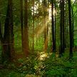 Минлесхоз снял запреты на посещение лесов по всей Беларуси