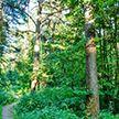 В Лоевском районе сотрудники МЧС спасли трёх потерявшихся в лесу детей