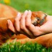 Проект закона о снижении возраста ответственности за жестокое обращение с животными внесли в Госдуму России