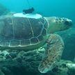 Черепахи помогают разгадать тайны тропических циклонов