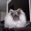 Это должен увидеть каждый: хмурый кот стал звездой Instagram (ФОТО и ВИДЕО)