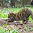 Посмотрите, как кошка изо всех сил куда-то бежит утром!  Куда она опаздывает? Узнаете своего питомца? (ВИДЕО)