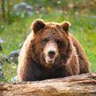 Парень спасал свою невесту от нападения медведя и упал вместе с ним со скалы
