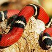 Спасатели отловили редкую змею в квартире жителя Витебска