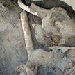 Скелет мамонта с мягкими тканями и шерстью обнаружили в Якутии
