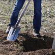 «Зеленый двор – вместе»: минчанам предлагают посадить деревья в городе